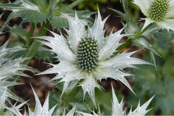 jim-p-spikey-flower