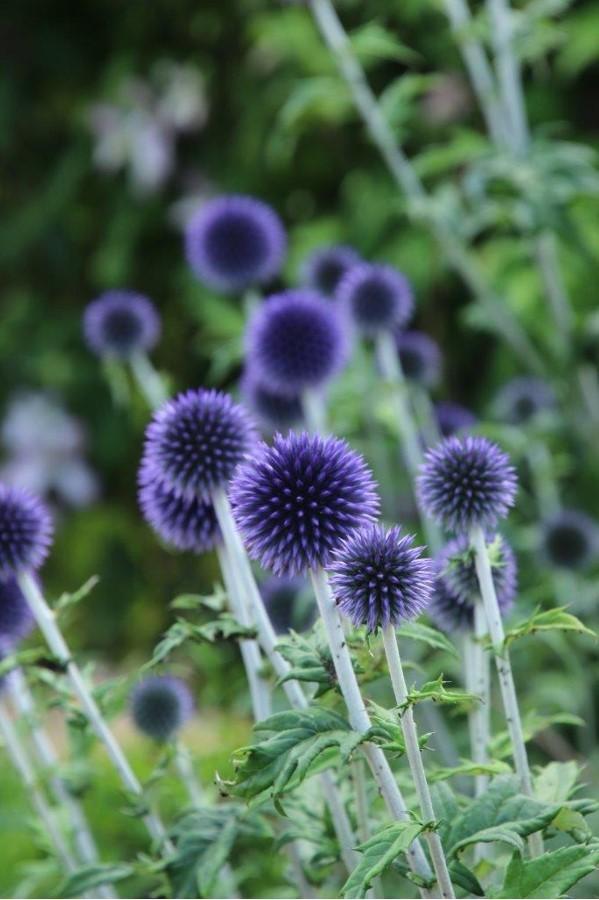 kathy-p-blue-flower